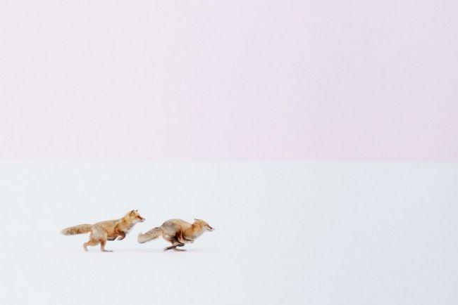 Победители конкурса туристических фото 2016 года: 12 потрясающих работ