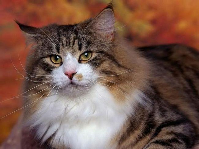 Почему нельзя смотреть кошке в глаза? Домыслы и суеверия?