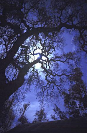 Почему нельзя смотреть на луну? Какую угрозу таит в себе лунный свет?