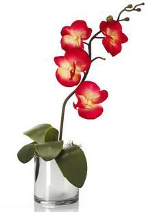 Почему желтеют листья у орхидей комнатных?