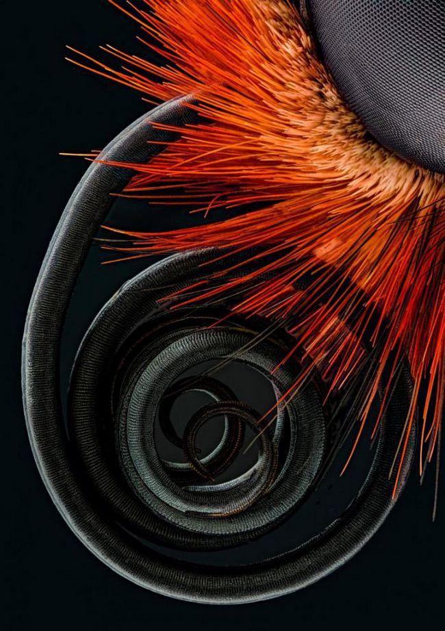 Под микроскопом: необычные фото знакомых нам растений и животных