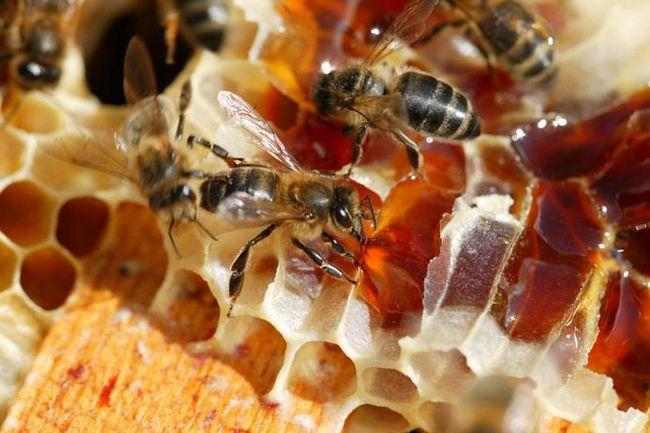 Поэтический продукт: вересковый мед