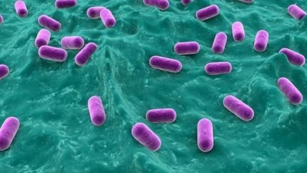 вредные бактерии для человека