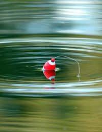 Поплавочная удочка: ловля щуки на живца