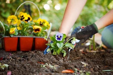 Посадка цветов на садовом участке