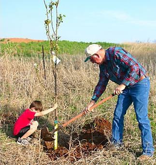 посадка плодовых деревьев осенью