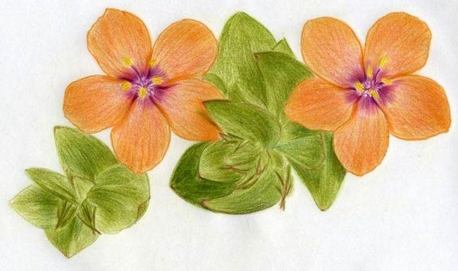 Пошаговый урок, как рисовать цветы карандашом