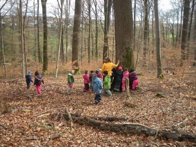 Правила безопасности, или как вести себя в лесу