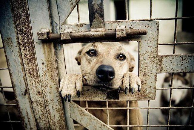 взять собаку из приюта в нижнем новгороде
