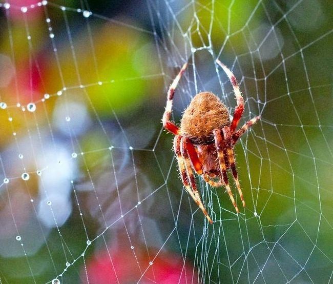 Приметы про пауков. К чему пауки в доме?
