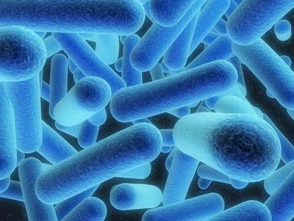 классификация микроорганизмов микробиология