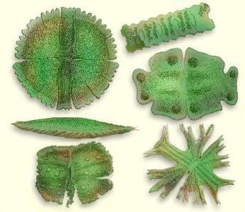 классификации микроорганизмов