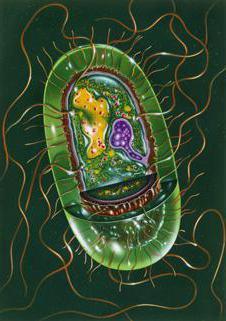 морфология и классификация микроорганизмов