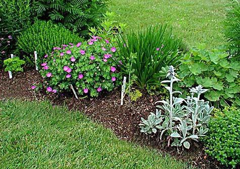 растения для дачи