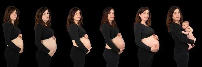 беременности календарь