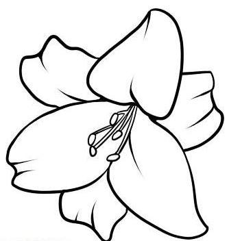 Просто о сложном: как нарисовать лилию