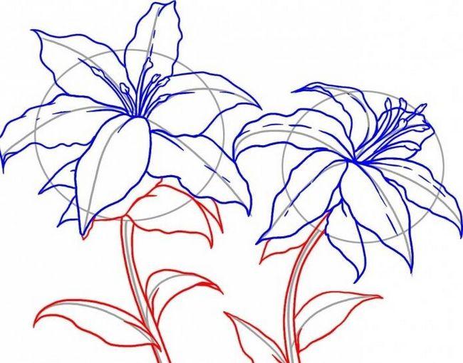 рисуем лилию поэтапно