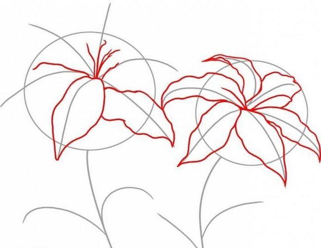 как рисовать лилию карандашом