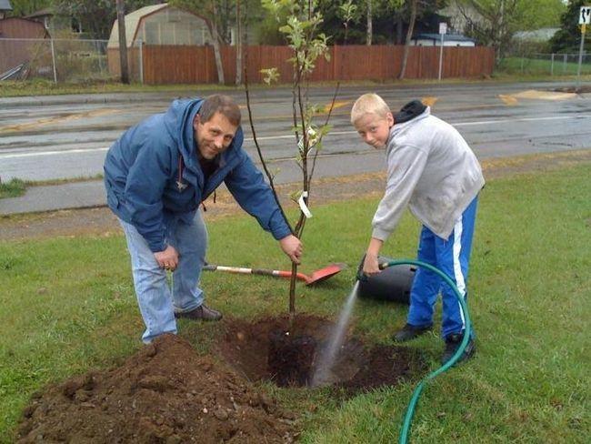 как посадить яблоню осенью