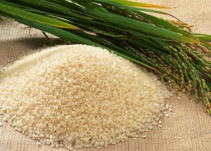 Рис -злаковая кльтура