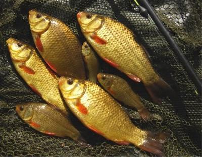 Рыбалка: какая наживка для карася лучше?