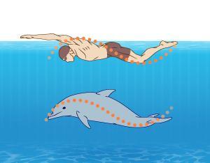 Самая эффективная техника – плавание баттерфляем