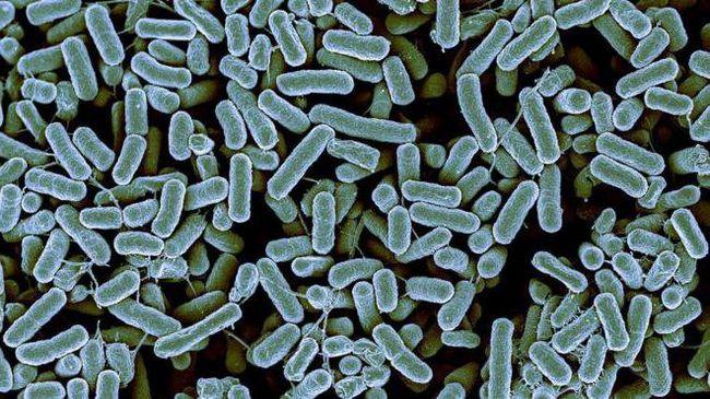 самые интересные факты о бактериях
