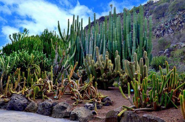 ботанический сад жардин канарио