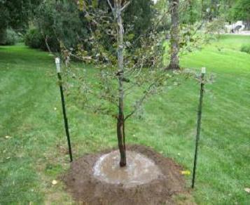 Где купить саженцы деревьев