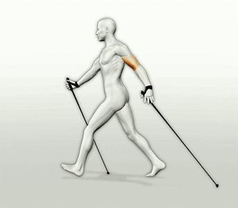 Скандинавская ходьба с палками: противопоказания практически отсутствуют!