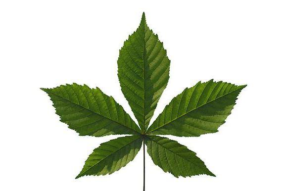 листья сложные их жилкование