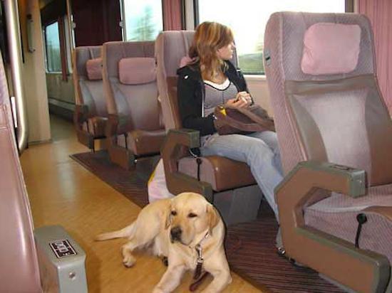 правила провоза животных в поезде