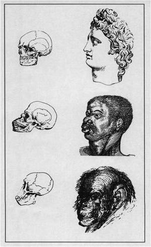 Социальный дарвинизм. Особенности теории