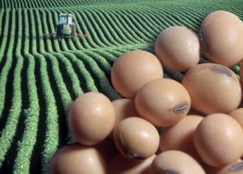 Соевые бобы: результат генной инженерии или полезный диетический продукт?