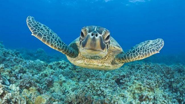 снится черепаха