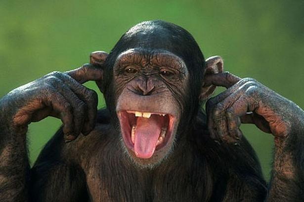 к чему снится большая обезьяна