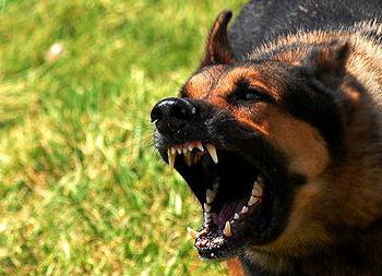 Сонник: злая собака - толкование сновидения