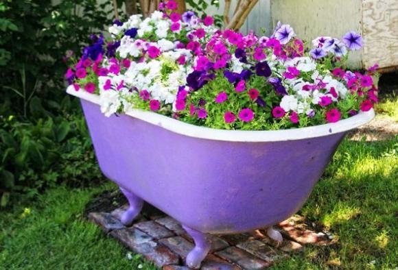 Советы садоводу: когда сажать петунию