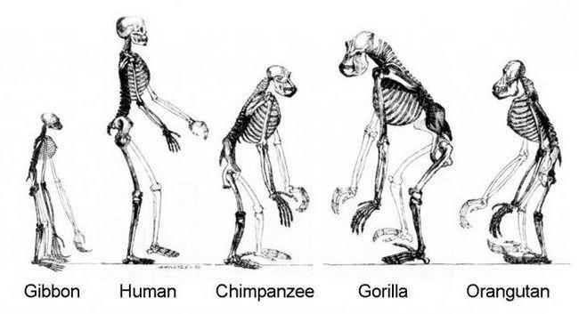 место человека в системе органического мира империя