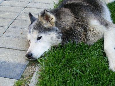 Судороги у собак — грозный симптом, требующий внимания
