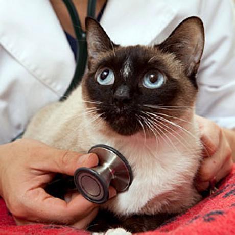 Токсоплазмоз у кошек, лечение