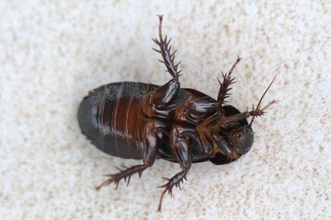 убивать во сне тараканов