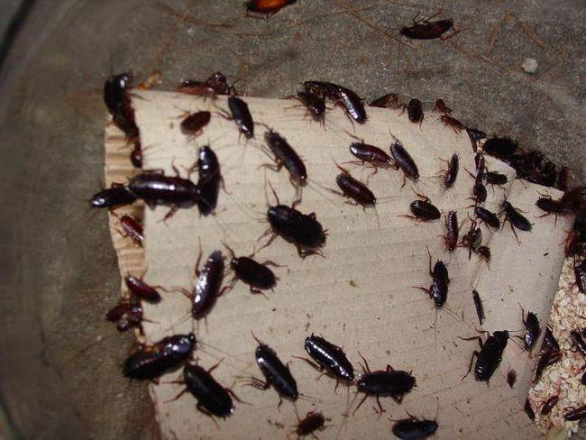 сонник убить таракана во сне