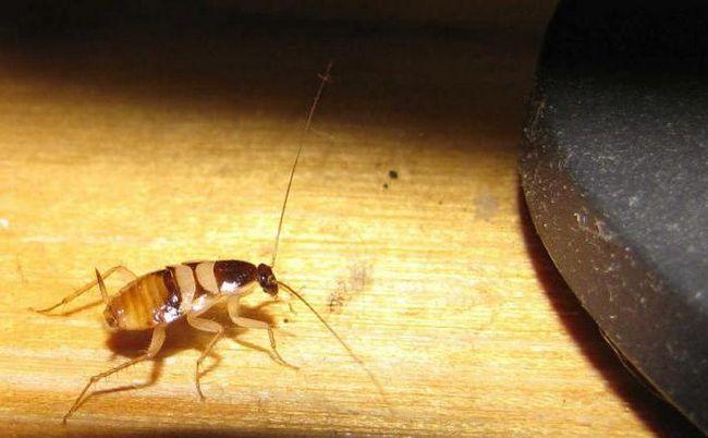 убить таракана во сне что значит