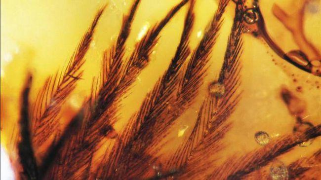 Ученые впервые обнаружили перья динозавров, которые сохранились в янтаре