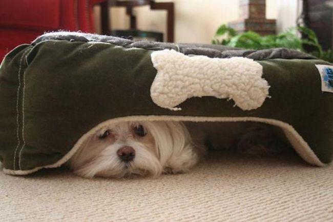 В каких случаях вашему питомцу срочно требуется помощь ветеринара?