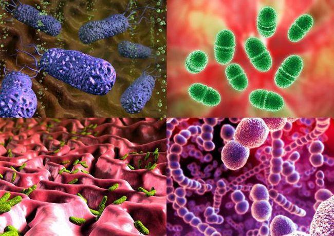 одноклеточный микроорганизм