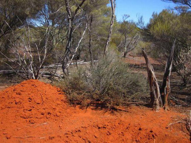 как называется верхний слой почвы
