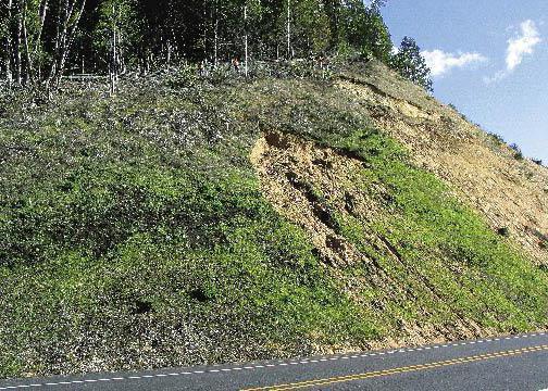 заросший травой верхний слой почвы