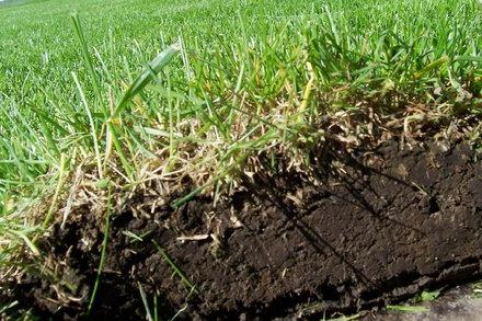 верхний слой почвы